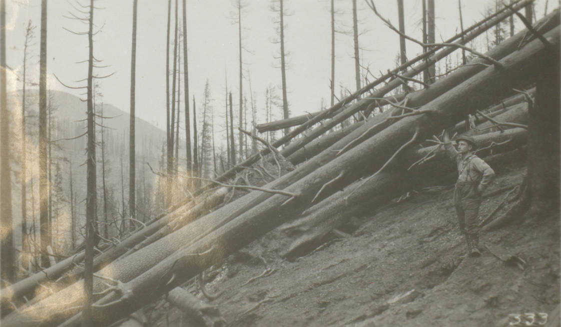 item thumbnail for Man poses with burned giant trees