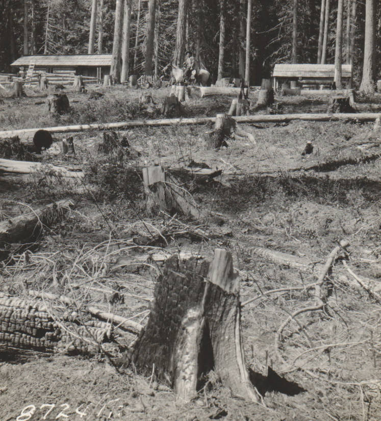 item thumbnail for Williams homestead, possible false homestead claim, Marble Creek