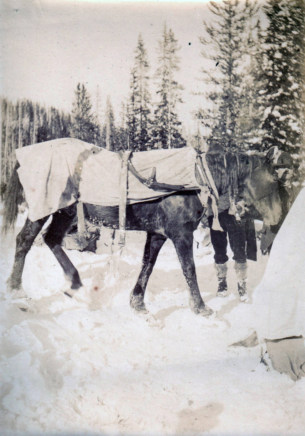 item thumbnail for Horse on snowshoes, Buffalo Hump