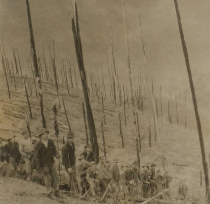 item thumbnail for Planting crews after burn