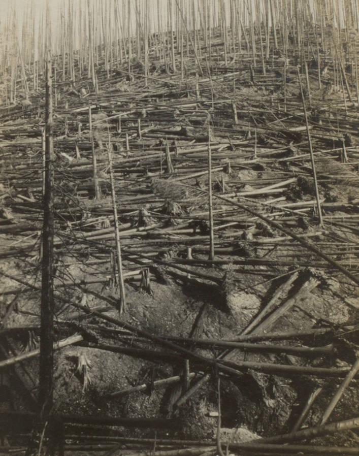 item thumbnail for Burned ravine side