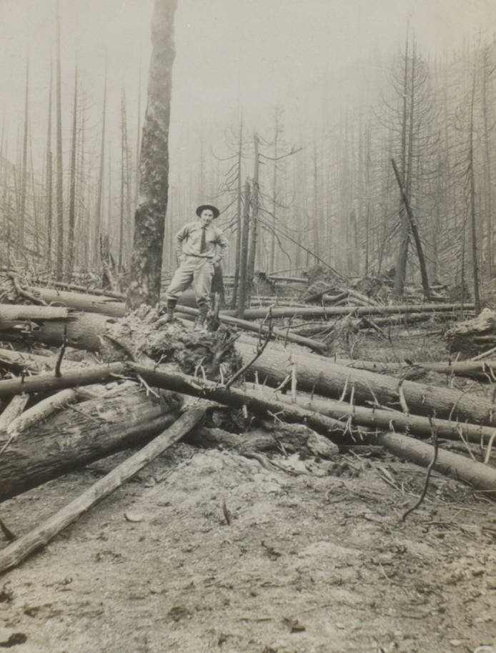 item thumbnail for Man stands on burned, fallen timber over trail