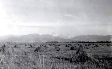 item thumbnail for Wheat field in Teton Valley. Teton County, Idaho.