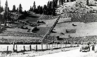 item thumbnail for Mr. Sperry's hanging garden. Ferrel, Idaho.