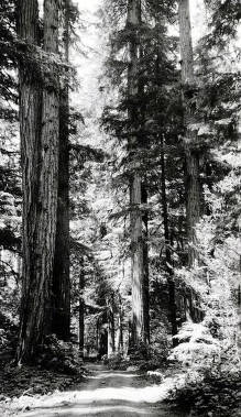 item thumbnail for Forest scene. St. Joe Forest. Idaho