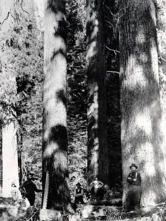 item thumbnail for Lumbermen in the forest. St. Joe Forest. Idaho.