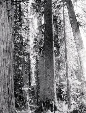 item thumbnail for Lumbermen leaning against White Pine. St. Joe Forest. Idaho.