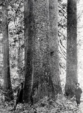 item thumbnail for Lumbermen and White Pine. St. Joe Forest. Idaho.