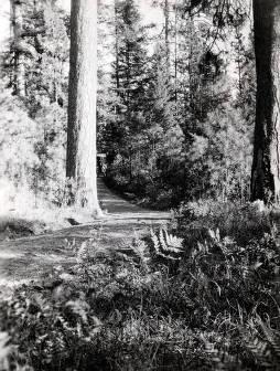 item thumbnail for Forest scene. St. Joe Forest. Idaho.