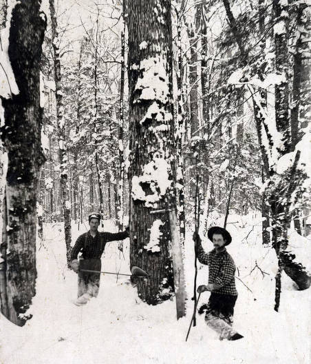 item thumbnail for Cutting timber in about ten feet of snow. Near Hunicker Logging Camp above Elk River, Idaho.