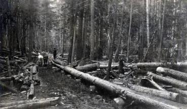 item thumbnail for Schmidt Brothers Lumber Co. log chute. Eileen, Idaho.
