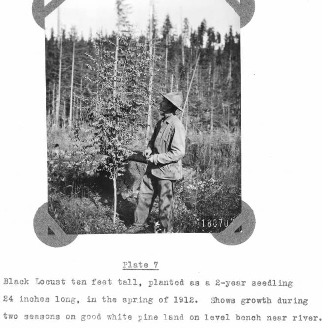 item thumbnail for Shows growth during two seasons on good white pine land on level bench near river