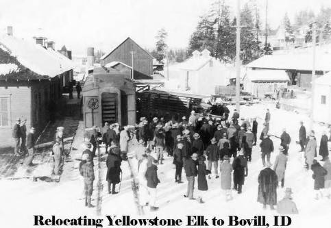 item thumbnail for Crowd watching Relocating Elk