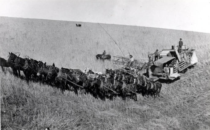 item thumbnail for Horsepower combine harvesting wheat