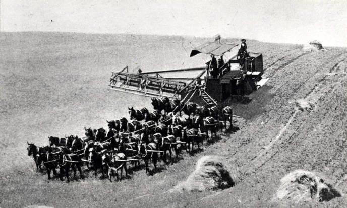 item thumbnail for Mules pulling combine