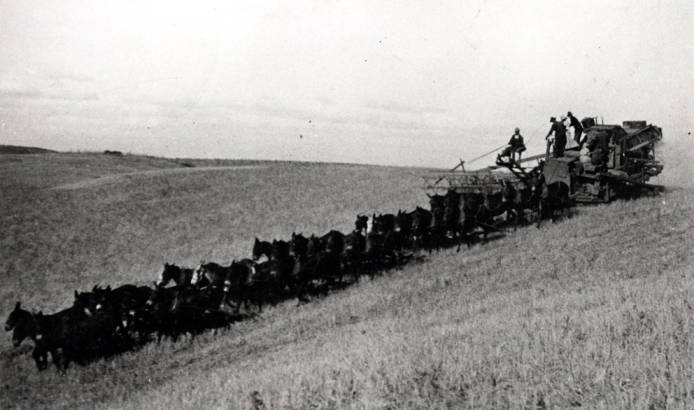 item thumbnail for Mules pulling combine on Hampton ranch