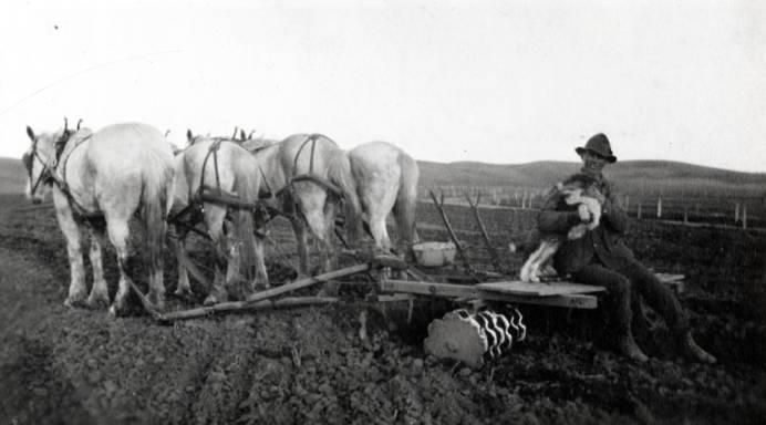 item thumbnail for Bill Mortensen driving four horses