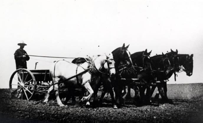 item thumbnail for Six horses pulling grain drill