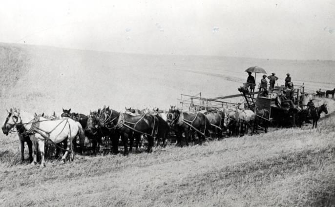 item thumbnail for Horses pulling combine on Randall farm