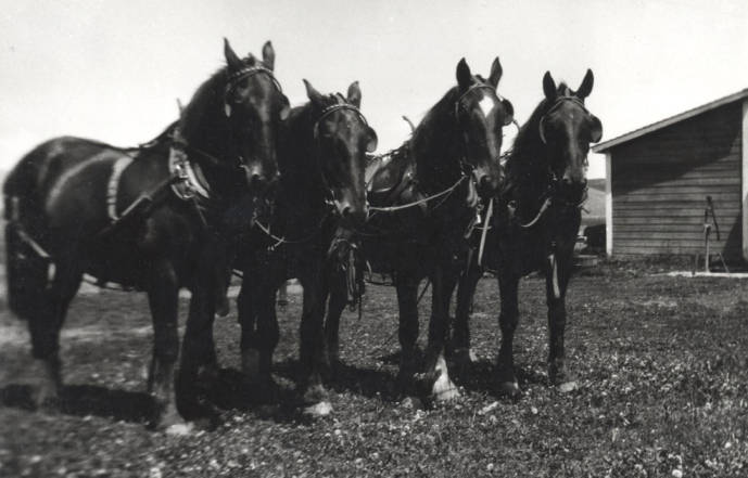 item thumbnail for Four horse team owned by Clifford M. Ott