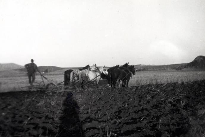item thumbnail for Ott plowing with six horse team on Skattaboe farm