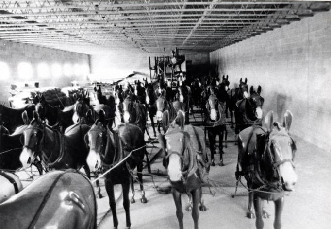 item thumbnail for Mule-team combine display in museum in Walla Walla