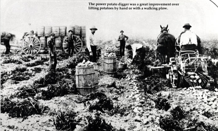 item thumbnail for Power potato diggers in use