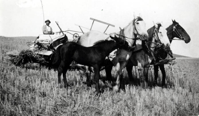 item thumbnail for Joe Phillips cutting grain on his farm