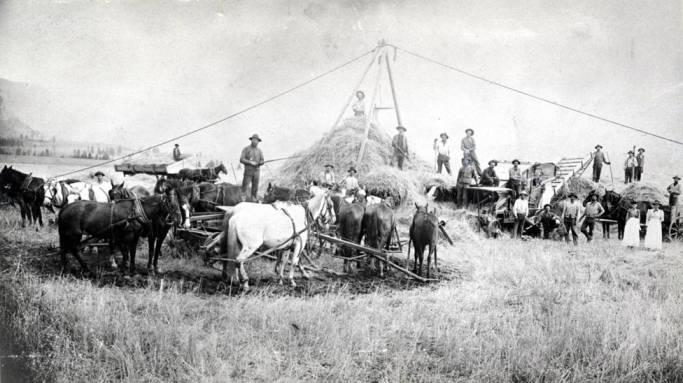 item thumbnail for Horsepower threshing headed grain