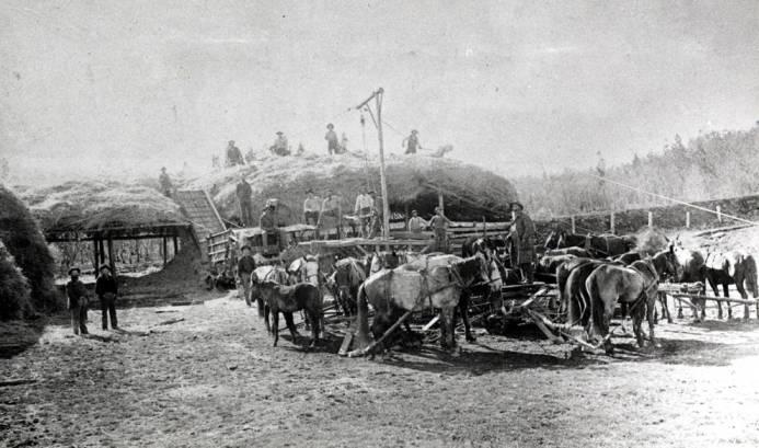 item thumbnail for Horsepower threshing stacked bundled grain