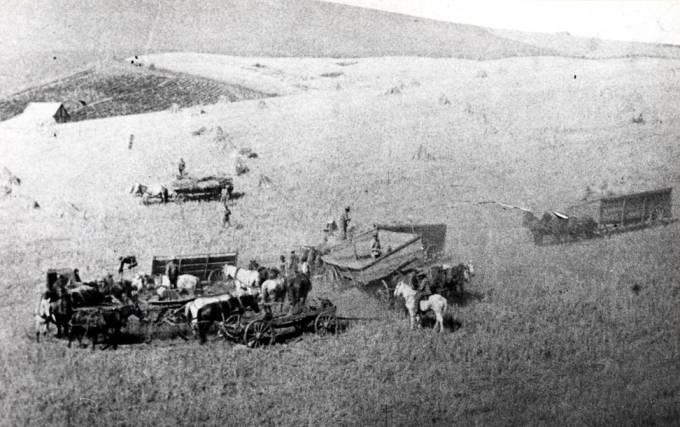 item thumbnail for Horsepower threshing about 1895 near Colfax