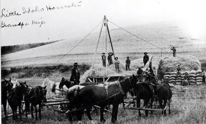 item thumbnail for Horsepower threshing outfit of Franklin E. Mix