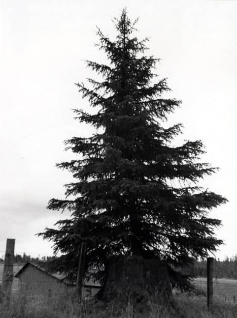 item thumbnail for Tree near Byseggar buildings
