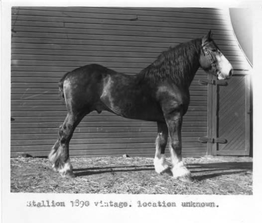 item thumbnail for Stallion 1890 vintage