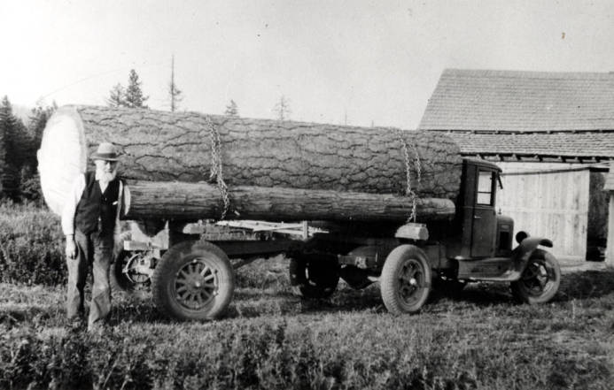 item thumbnail for Ivor Swenson and white pine logs