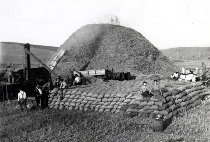 item thumbnail for Threshing scene showing about 1260 sacks of grain