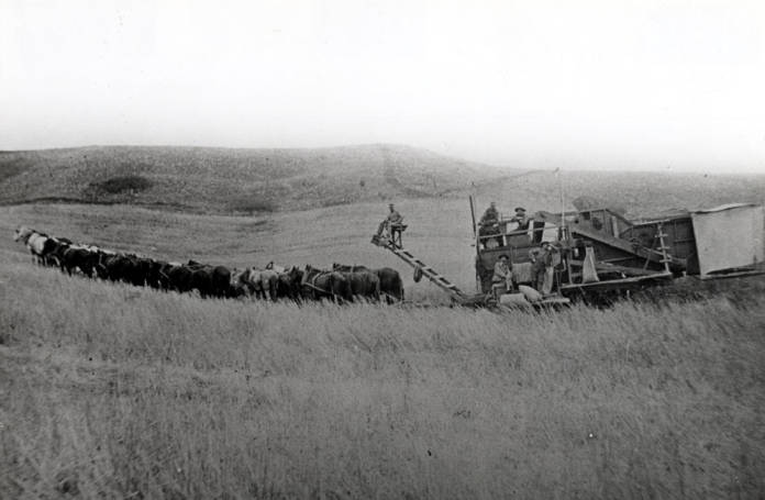 item thumbnail for Thirty-two horses pulling a ground-powered combine