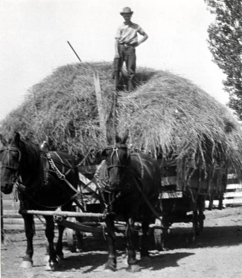 item thumbnail for Load of hay going to Naylor farm