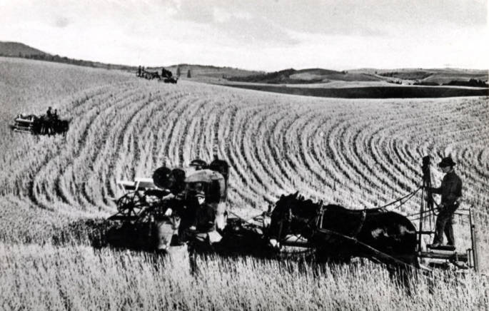 item thumbnail for Idaho National Harvester combing wheat on Moscow State's farm [01]
