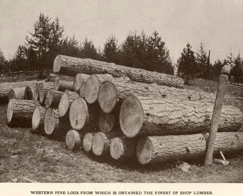 item thumbnail for Western Pine Logs