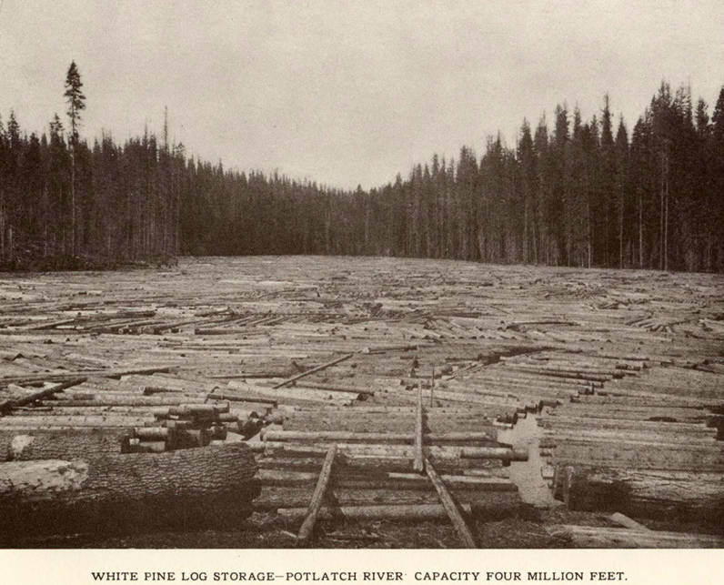 item thumbnail for White Pine Log Storage