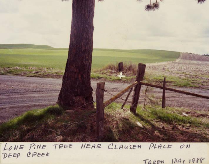 item thumbnail for Lone Pine Tree