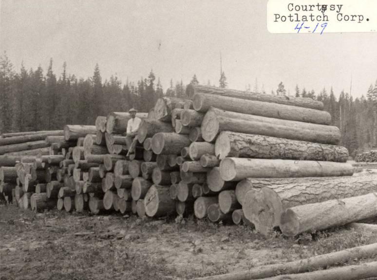 item thumbnail for Logging