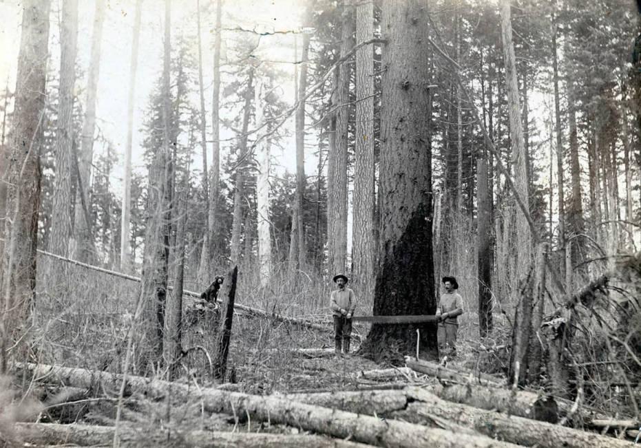 item thumbnail for Logging on the Katzenberger property