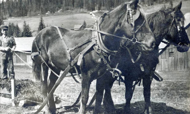 item thumbnail for Eddie Bysegger with two horses