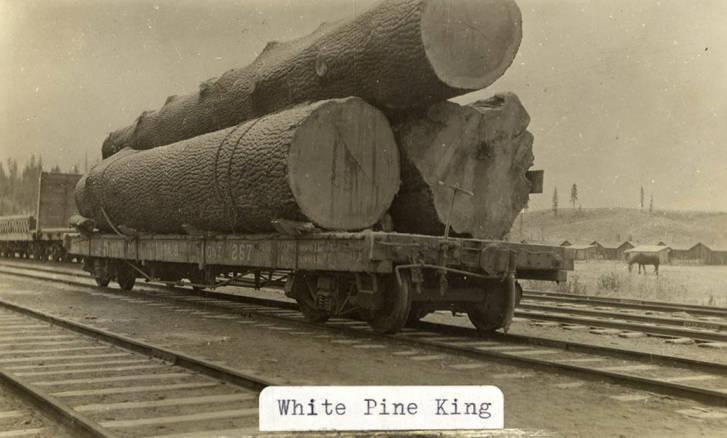 item thumbnail for White Pine King