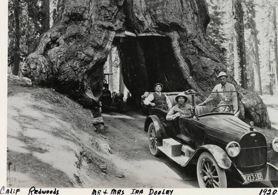 item thumbnail for California Redwoods