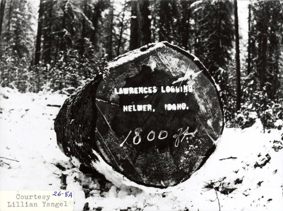item thumbnail for Lawrences Logging