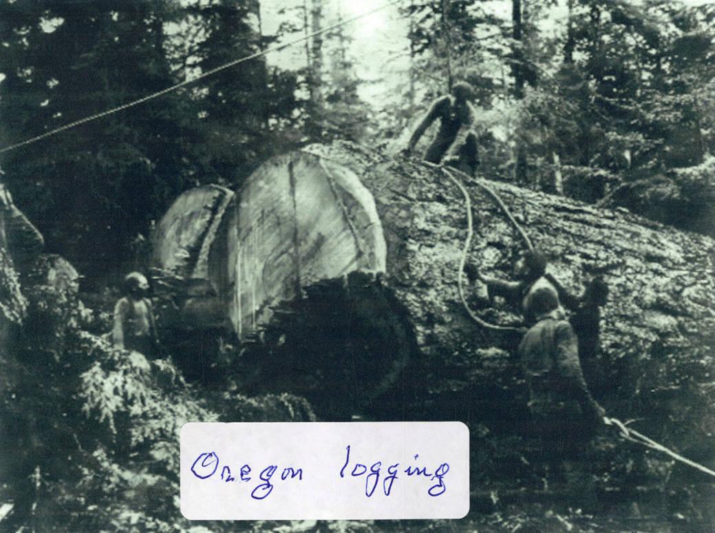 item thumbnail for Oregon Logging