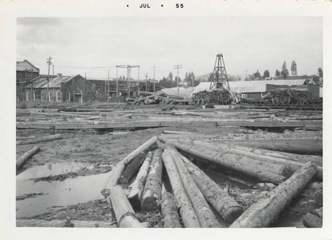 item thumbnail for Stranded Logs